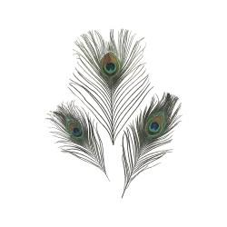 Peacock feathers 20cm (3 pcs)