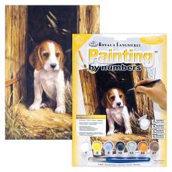 Paint by No. Junior 22,5cm x 30cm Beagle puppy