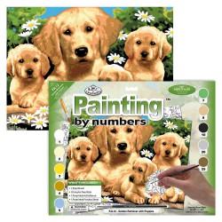 Paint by No. Junior 27,5cm x 35cm Golden retriever puppies