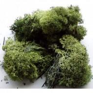 IJslandmos 25 gr groen