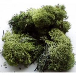 Iceland moss 25gr dark green