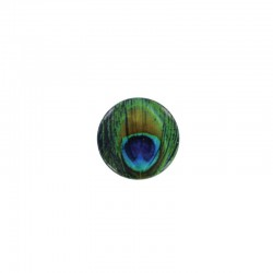 Shell cabochon 16mm printed x6pcs peacock feather