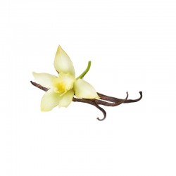 Candle perfume 10ml bottle vanilla