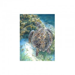 Sketching made easy 22,5x30cm Sea Turtle