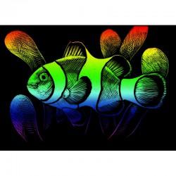 Mini engraving art.12,5x17,5cm rainbow. Clownfish