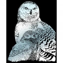 Engraving art.20,3x25,4cm silver. Snowy Owls