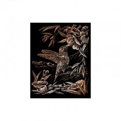Engraving art.20,3x25,4cm copper. Hummingbird