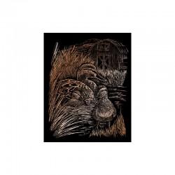 Engraving art.20,3x25,4cm copper. Ducks