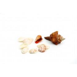 Sea shells assortment 400g